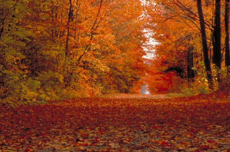 Fall Colours along a scenic route in Northumberland County