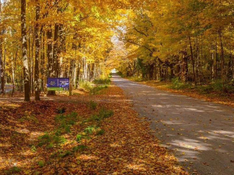 Road near Northumberland County Forest Universal Trail