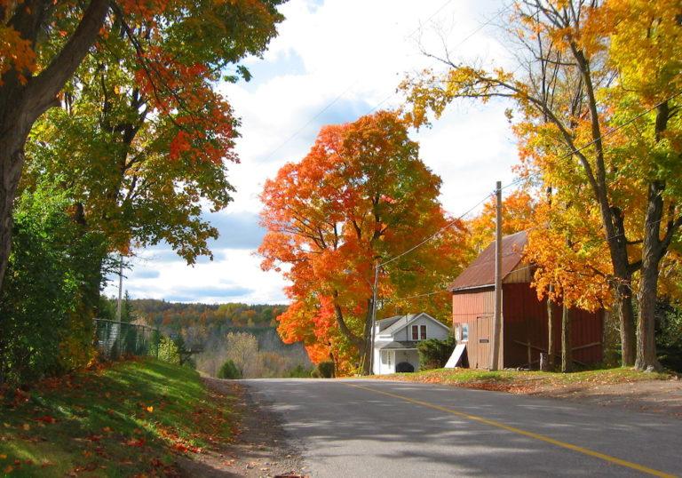 Fall colours along a drive near Dartford, Ontario